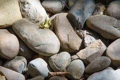 纹理,背景 小卵石 一块小石头做了光滑和roun 免版税库存照片