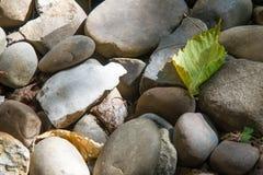 纹理,背景 小卵石 一块小石头做了光滑和roun 图库摄影