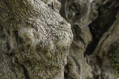 纹理-一个老橄榄的吠声 免版税库存照片