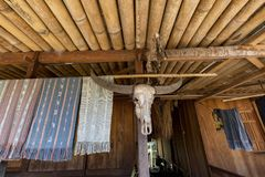 纺织品和水牛头骨 库存照片