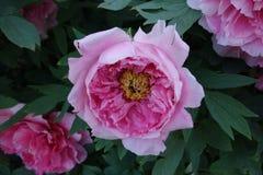 纽约植物园5月11日#4 免版税图库摄影