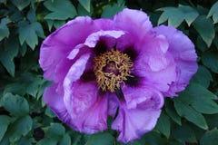 纽约植物园5月11日#5 图库摄影