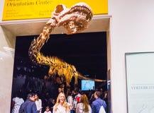 纽约,美利坚合众国- 2016年5月01日:在美国博物馆的Dinossaur Fossile模型自然 免版税库存照片