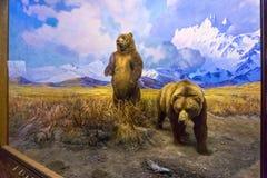 纽约,美利坚合众国- 2016年5月01日:美国自然历史博物馆 库存图片