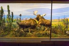 纽约,美利坚合众国- 2016年5月01日:美国自然历史博物馆 库存照片