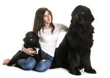 纽芬兰狗和青少年 免版税库存照片