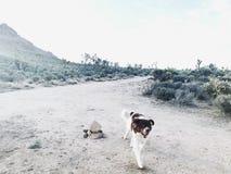 纽芬兰狗在沙漠 免版税库存照片