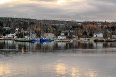 纽芬兰秀丽  免版税库存照片