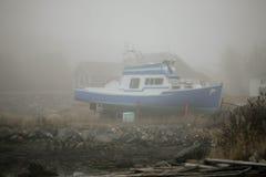 纽芬兰野兔海湾秀丽  图库摄影