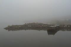 纽芬兰野兔海湾秀丽  免版税库存照片