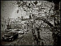 纽黑文,秋天&有风在Wooster广场,套九工作 库存图片