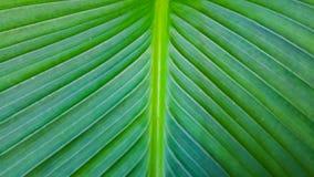 线和样式在植物叶子 库存照片