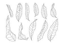 线在白色背景的干燥叶子 皇族释放例证