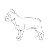 线性的法国牛头犬 库存图片
