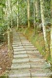 线索楼梯在森林里 库存图片