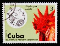 线虫Dispharynx nasuta,雄鸡背带背带domesticus,兽医serie,大约1975年 免版税库存照片