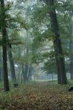 直线路径在早晨有雾的森林里 免版税库存照片