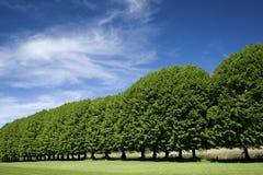 线路结构树 库存照片