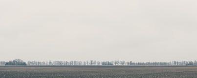 线路结构树 免版税图库摄影