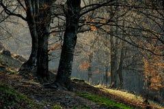 线索在森林里 图库摄影