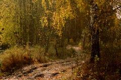 线索在秋天森林里 免版税库存图片