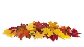 组五颜六色的秋叶 库存图片