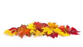 组五颜六色的秋叶 免版税图库摄影
