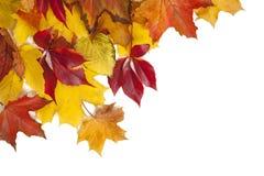 组五颜六色的秋叶 免版税库存图片