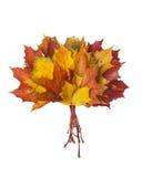 组五颜六色的秋叶 免版税库存照片