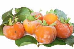 组亚洲柿树 免版税图库摄影
