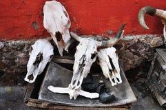 组公牛头骨概要 图库摄影