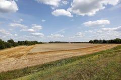 组合域收割机麦子 库存图片