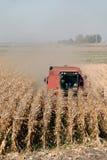 组合玉米 免版税库存图片