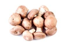 组在白色的porcini蘑菇 库存图片