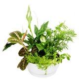 组室内植物。 免版税库存照片