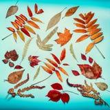 组成在土耳其玉色背景,顶视图的秋叶 免版税库存图片
