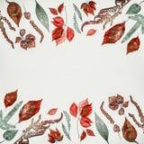 组成的秋天或用各种各样的五颜六色的秋天做的样式背景在轻的背景,顶视图离开 免版税库存图片