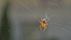 组成网关闭的蜘蛛 影视素材