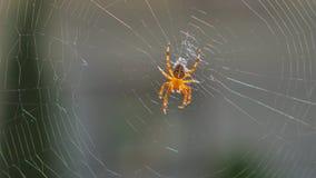 组成网关闭的蜘蛛 股票录像