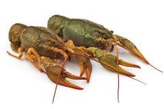 组新鲜的龙虾 库存照片