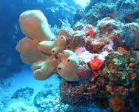 组海绵管 库存图片