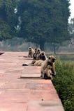 组猴子 免版税图库摄影