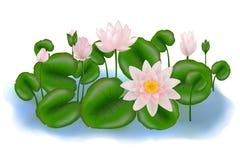 组留下lotuses向量 免版税库存照片