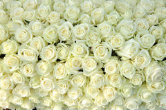 组空白玫瑰,婚姻的装饰 免版税库存照片