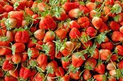 组草莓 图库摄影