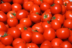 组蕃茄 免版税库存照片