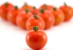 组蕃茄 免版税图库摄影