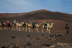 组装骆驼有蓬卡车与车手的 库存图片