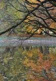 细节树枝,背景,秋天森林,明亮的叶子,反射在水中 免版税库存照片