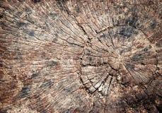细节被风化的树桩 库存图片